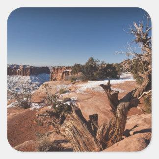 USA, Utah, Moab. Canyonlands National Park, Square Sticker