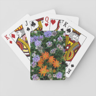 USA, Utah, Uinta-Wasatch-Cache National Forest 3 Poker Deck