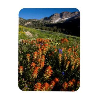 USA, Utah, Uinta-Wasatch-Cache National Forest Rectangular Photo Magnet