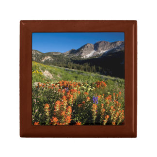 USA, Utah, Uinta-Wasatch-Cache National Forest Small Square Gift Box
