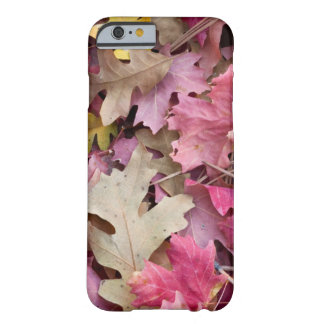 USA, Utah, Zion National Park Barely There iPhone 6 Case