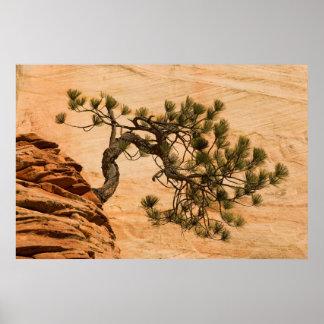 USA, Utah, Zion National Park. Pine tree Poster