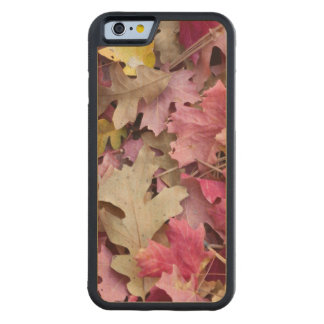USA, Utah, Zion National Park Maple iPhone 6 Bumper