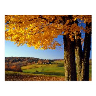 USA, Vermont. Farm Scenic Near South Woodstock Postcard