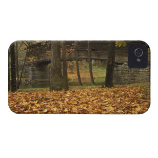 USA, Virginia, Covington, Humpback Covered iPhone 4 Cases