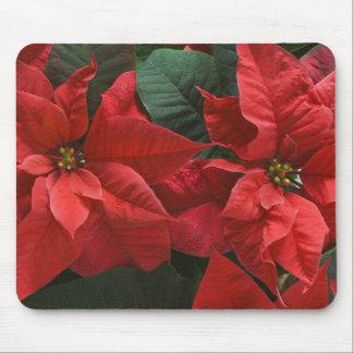 USA, WA, Red Poinsettia Detail (Euphorbia Mouse Pad