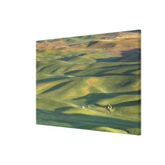 USA, WA, Whitman Co., Palouse Farm Fields From Stretched Canvas Print