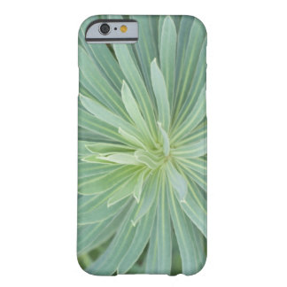 USA, Washington, Bellevue, Bellevue Botanical 4 Barely There iPhone 6 Case