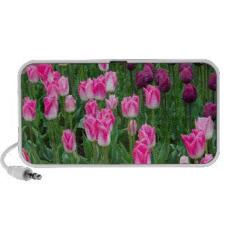 USA, Washington. Blooming Tulips iPhone Speakers