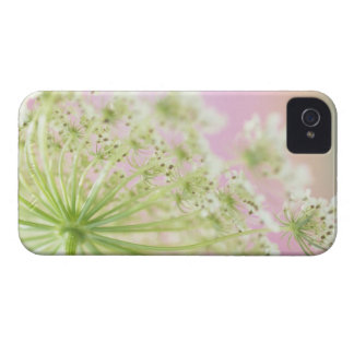 USA, Washington, Close-up of cow parsnip iPhone 4 Cases