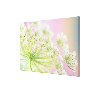 USA, Washington, Close-up of cow parsnip Gallery Wrap Canvas