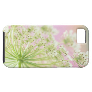 USA, Washington, Close-up of cow parsnip iPhone 5 Cover