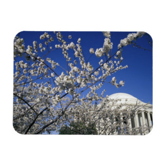 USA, Washington DC. Cherry Blossom Festival and 2 Rectangular Photo Magnet