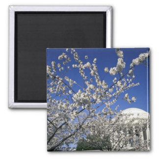 USA, Washington DC. Cherry Blossom Festival and 2 Square Magnet