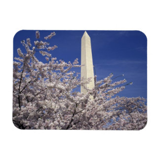 USA, Washington DC. Cherry Blossom Festival and Rectangular Photo Magnet