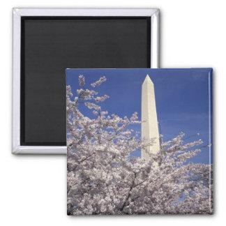 USA, Washington DC. Cherry Blossom Festival and Square Magnet