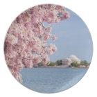 USA, Washington DC, Cherry tree Plate