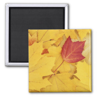 USA, Washington, Finch Arboretum, Red and Square Magnet