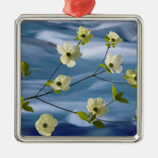 USA, Washington, Hood Canal. Pacific dogwood Silver-Colored Square Decoration