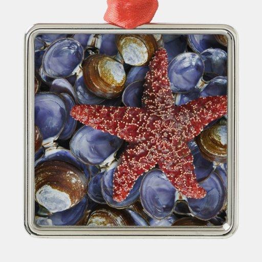 USA, Washington, Hood Canal, Seabeck. Close-up Ornaments