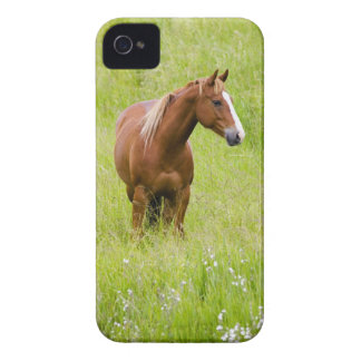 USA, Washington, Horse in Spring Field, iPhone 4 Cases
