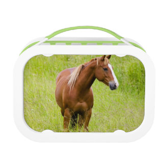 USA, Washington, Horse in Spring Field, Lunchboxes