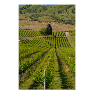 USA, Washington, Lake Chelan. Vineyard 2 Poster