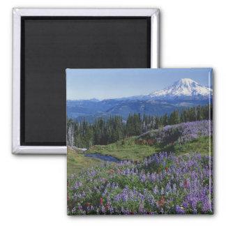 USA, Washington Mt. Adams Wilderness, Meadows Square Magnet