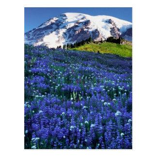 USA, Washington, Mt. Rainier National Park. Mt. Postcard