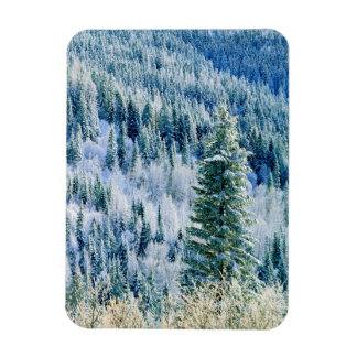 USA, Washington, Mt. Spokane State Park, Aspen Rectangular Photo Magnet