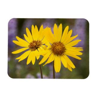 USA, Washington, Okanogan National Forest Rectangular Photo Magnet