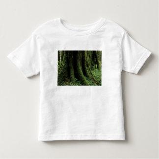 USA, Washington, Olympic National Park, 2 Shirt