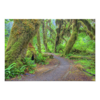 USA, Washington, Olympic National Park, Hoh 2 Photo Print