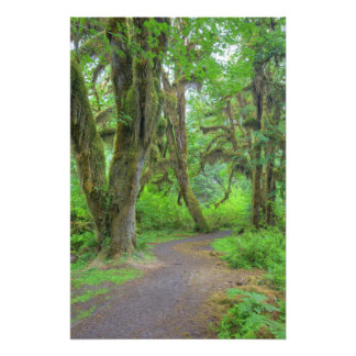 USA, Washington, Olympic National Park, Hoh Photo Art