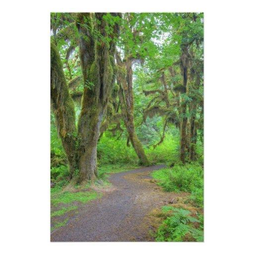 USA, Washington, Olympic National Park, Hoh Photo Art