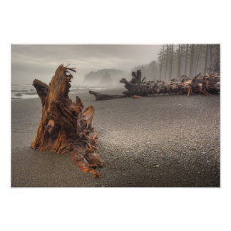USA, Washington, Olympic National Park, Rialto 2 Photo Print