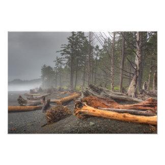 USA, Washington, Olympic National Park, Rialto Photo Print