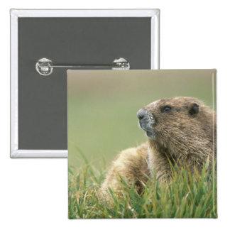 USA, Washington, Olympic NP, Olympic Marmot 15 Cm Square Badge