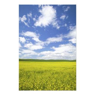 USA, Washington, Palouse Country, Blooming Photograph