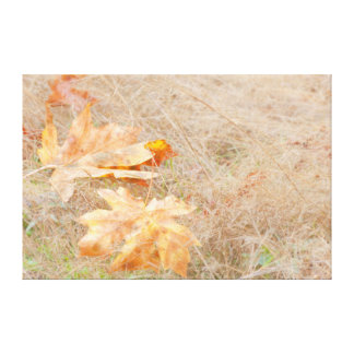 USA, Washington, Quinault. Maple Leaves Stretched Canvas Prints
