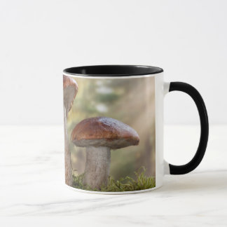 USA, Washington, Seabeck. Leccinum Insigne Mug