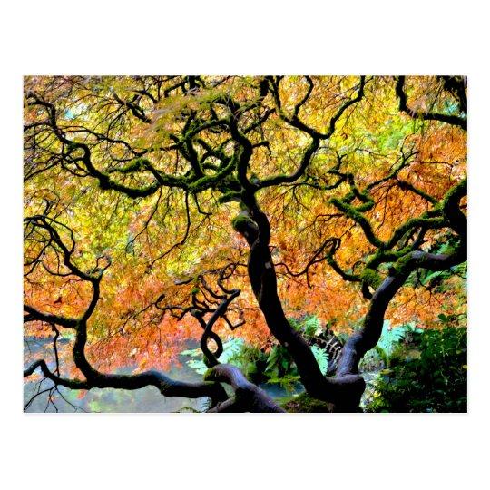 USA, Washington, Seattle, Kubota Garden. Postcard