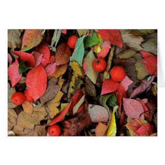 USA, Washington, Spokane Co., Hawthorn Leaves Card