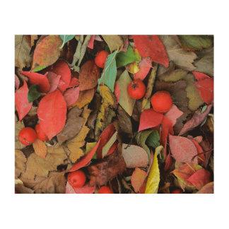 USA, Washington, Spokane Co., Hawthorn Leaves Wood Print