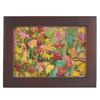 USA, Washington, Spokane County, Hawthorn Leaves 2 Keepsake Box