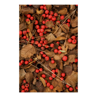 USA, Washington, Spokane County, Hawthorn Leaves Poster