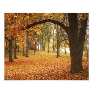 USA, Washington, Spokane, Manito Park, Autumn 2 Photo