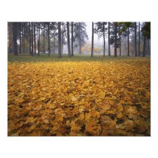 USA, Washington, Spokane, Manito Park, Autumn Photo Print