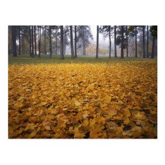 USA, Washington, Spokane, Manito Park, Autumn Postcard