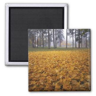 USA, Washington, Spokane, Manito Park, Autumn Square Magnet